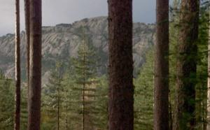 Une forêt, pour quoi faire?